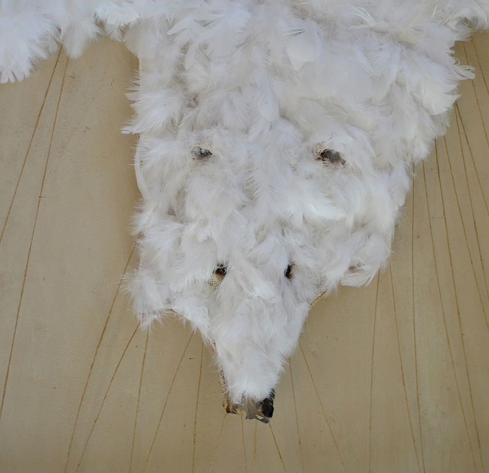 polarbear-kop-vk