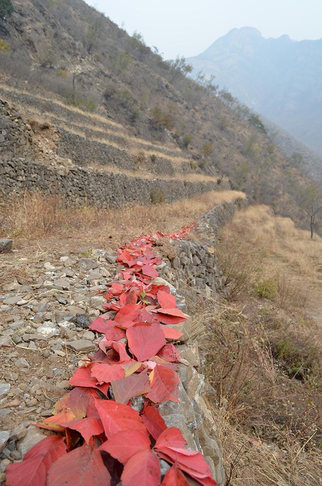 streep in bergen