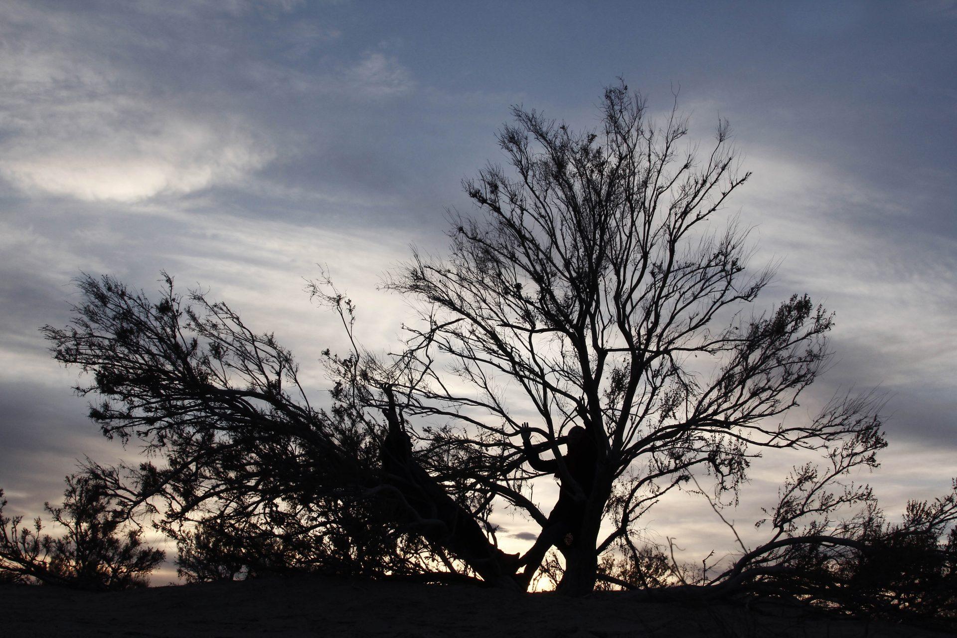 Leaning in tree-TaraGoudarzi-KarinvanderMolen-collaboration-Reyhaneh zanganeh -Khara-desert-2016 _1