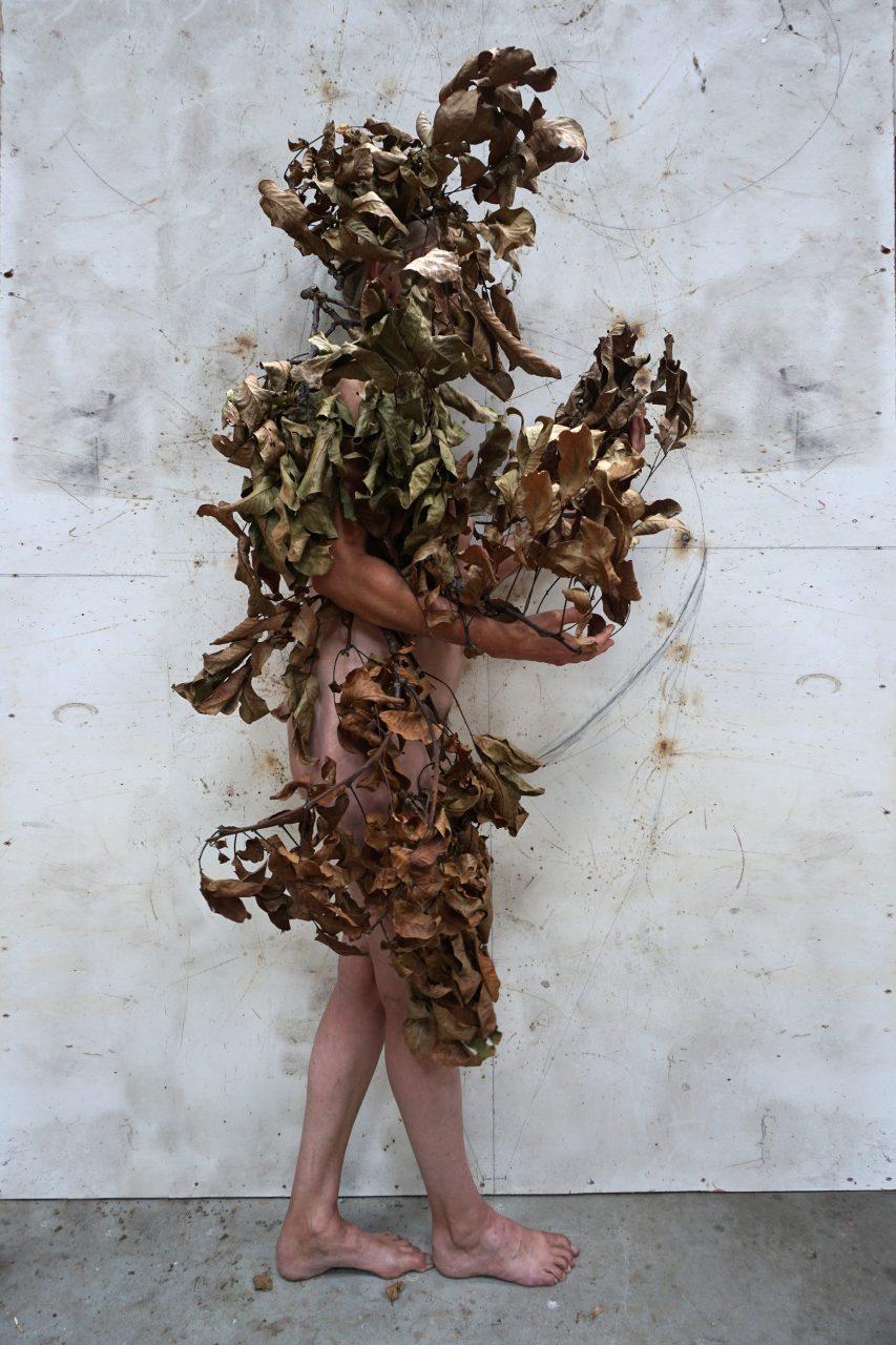 herbarium-autumn