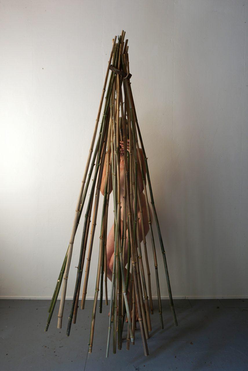 herbarium-bamboo