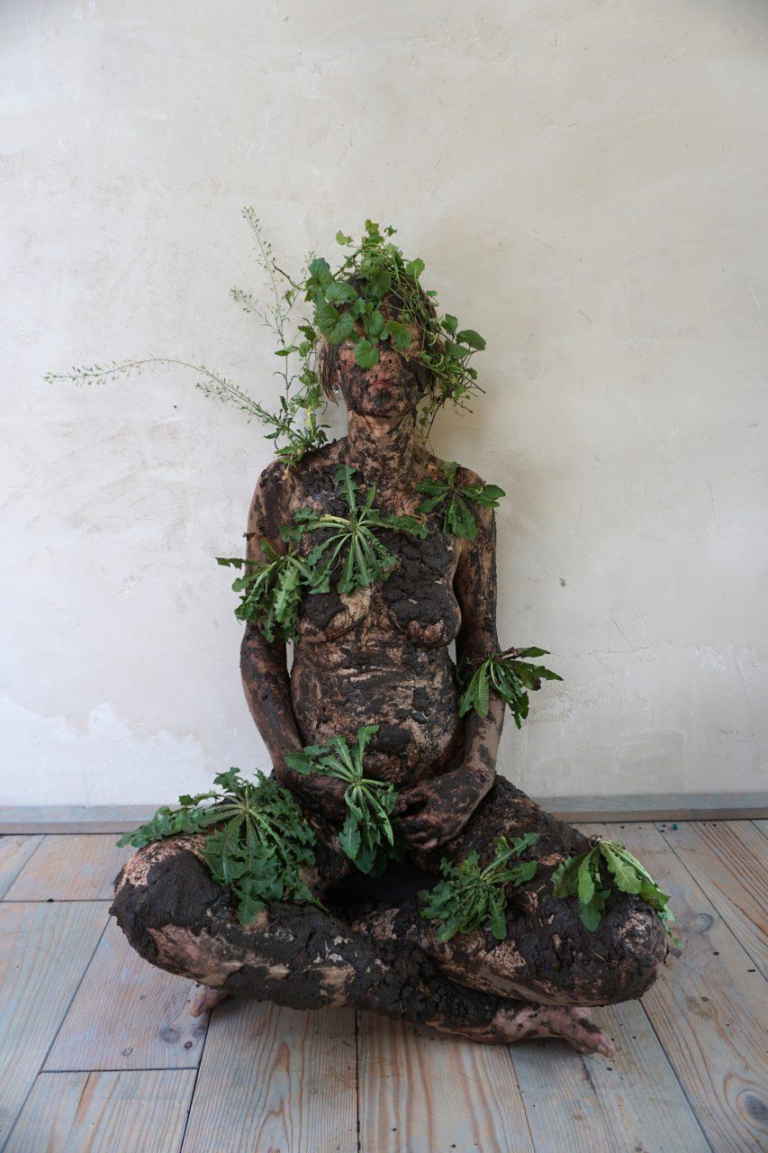 herbarium - soil1