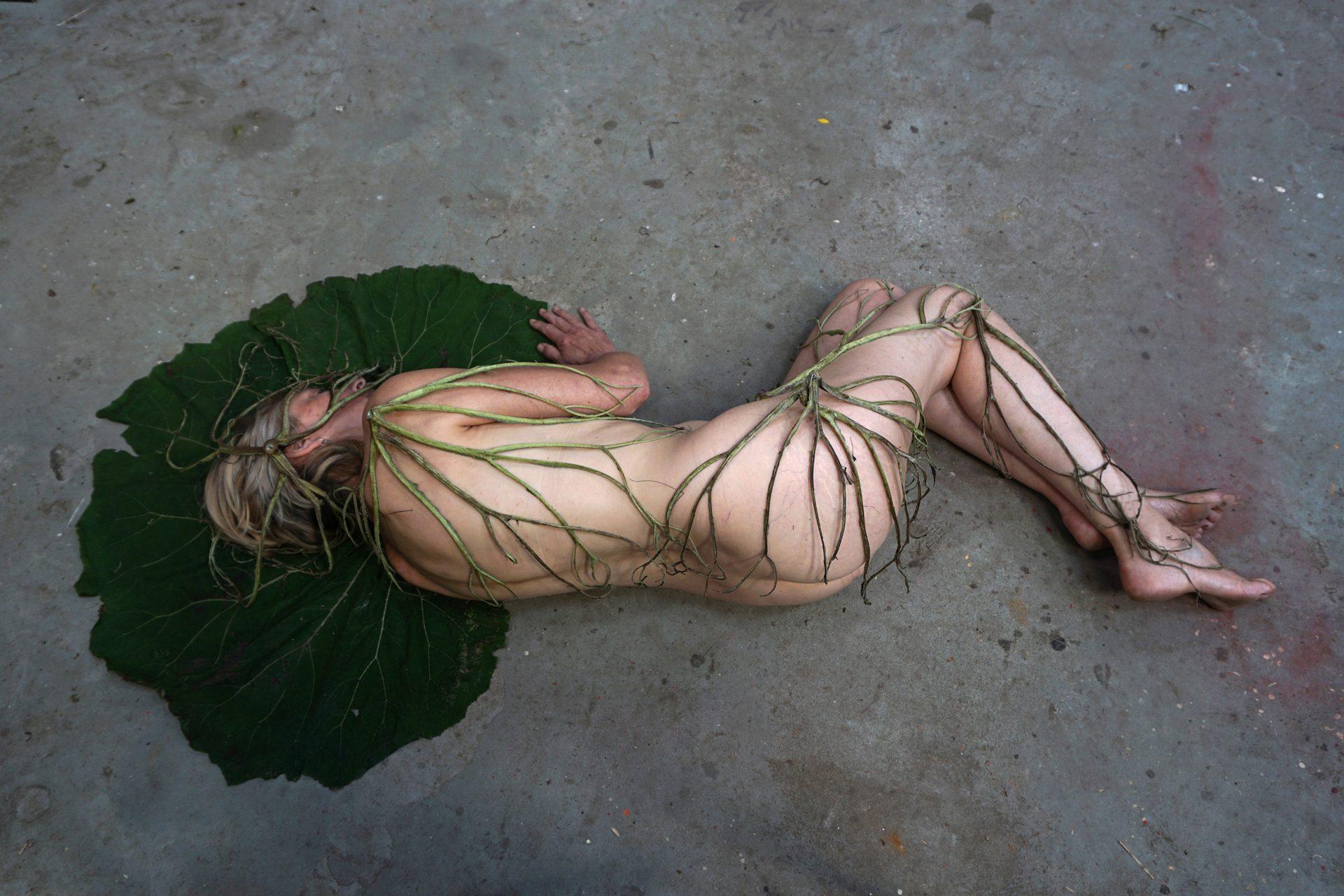 herbarium-the veins